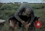 Image of sentry dog examined Tan Son Nhut Air Force Base Vietnam, 1965, second 7 stock footage video 65675028502