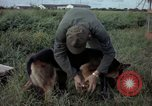 Image of sentry dog examined Tan Son Nhut Air Force Base Vietnam, 1965, second 8 stock footage video 65675028502