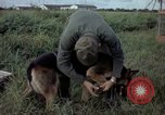Image of sentry dog examined Tan Son Nhut Air Force Base Vietnam, 1965, second 9 stock footage video 65675028502
