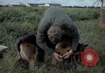 Image of sentry dog examined Tan Son Nhut Air Force Base Vietnam, 1965, second 10 stock footage video 65675028502