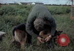 Image of sentry dog examined Tan Son Nhut Air Force Base Vietnam, 1965, second 11 stock footage video 65675028502