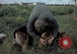 Image of sentry dog examined Tan Son Nhut Air Force Base Vietnam, 1965, second 12 stock footage video 65675028502