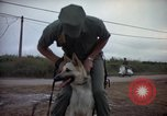 Image of sentry dogs Tan Son Nhut Air Force Base Vietnam, 1965, second 6 stock footage video 65675028510