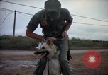Image of sentry dogs Tan Son Nhut Air Force Base Vietnam, 1965, second 7 stock footage video 65675028510