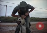 Image of sentry dogs Tan Son Nhut Air Force Base Vietnam, 1965, second 8 stock footage video 65675028510