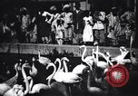 Image of People watching Flamingos in a zoo India, 1953, second 4 stock footage video 65675028600