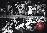 Image of People watching Flamingos in a zoo India, 1953, second 5 stock footage video 65675028600