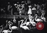Image of People watching Flamingos in a zoo India, 1953, second 6 stock footage video 65675028600