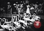 Image of People watching Flamingos in a zoo India, 1953, second 8 stock footage video 65675028600