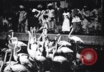 Image of People watching Flamingos in a zoo India, 1953, second 11 stock footage video 65675028600
