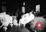Image of poodles in National Competition Canada, 1958, second 6 stock footage video 65675028658