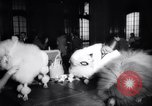 Image of poodles in National Competition Canada, 1958, second 7 stock footage video 65675028658