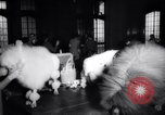 Image of poodles in National Competition Canada, 1958, second 8 stock footage video 65675028658