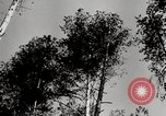 Image of German build wooden tents Russia, 1944, second 12 stock footage video 65675028703