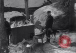 Image of Malamute Alaskan sledge dogs Wonalancet New Hampshire USA, 1934, second 7 stock footage video 65675028712