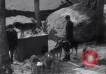 Image of Malamute Alaskan sledge dogs Wonalancet New Hampshire USA, 1934, second 8 stock footage video 65675028712
