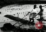 Image of Korean farmers cutting dry land in paddy field Korea, 1936, second 9 stock footage video 65675028842