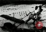 Image of Korean farmers cutting dry land in paddy field Korea, 1936, second 10 stock footage video 65675028842