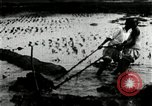 Image of Korean farmers cutting dry land in paddy field Korea, 1936, second 11 stock footage video 65675028842