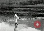 Image of Korean farmers scatters seeds in rice field Korea, 1936, second 12 stock footage video 65675028844