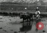 Image of Korean farmer harrowing Korea, 1936, second 8 stock footage video 65675028846