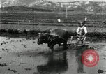 Image of Korean farmer harrowing Korea, 1936, second 9 stock footage video 65675028846