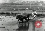 Image of Korean farmer harrowing Korea, 1936, second 10 stock footage video 65675028846
