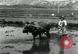 Image of Korean farmer harrowing Korea, 1936, second 11 stock footage video 65675028846