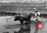 Image of Korean farmer harrowing Korea, 1936, second 12 stock footage video 65675028846