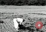 Image of Korean farmers spread manure Korea, 1936, second 10 stock footage video 65675028847