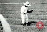 Image of Korean farmers plant seedlings Korea, 1936, second 9 stock footage video 65675028849