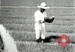 Image of Korean farmers plant seedlings Korea, 1936, second 11 stock footage video 65675028849