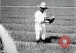 Image of Korean farmers plant seedlings Korea, 1936, second 12 stock footage video 65675028849
