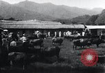 Image of Korean farmers at a bull's market Korea, 1936, second 11 stock footage video 65675028855