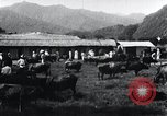 Image of Korean farmers at a bull's market Korea, 1936, second 12 stock footage video 65675028855