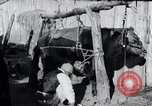 Image of korean farmer nails steel shoes to his bull Korea, 1936, second 10 stock footage video 65675028856