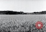 Image of harvesting rice crops Korea, 1936, second 12 stock footage video 65675028859