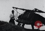 Image of Bull loaded with crop Korea, 1936, second 9 stock footage video 65675028860