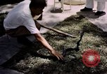 Image of Snake Farm Bangkok Thailand, 1939, second 9 stock footage video 65675028962