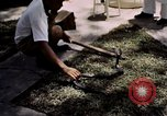Image of Snake Farm Bangkok Thailand, 1939, second 10 stock footage video 65675028962