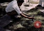 Image of Snake Farm Bangkok Thailand, 1939, second 11 stock footage video 65675028962