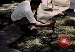 Image of Snake Farm Bangkok Thailand, 1939, second 12 stock footage video 65675028962