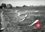 Image of cotton picking contest Arkansas United States USA, 1957, second 5 stock footage video 65675028966