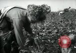 Image of cotton picking contest Arkansas United States USA, 1957, second 8 stock footage video 65675028966