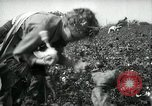 Image of cotton picking contest Arkansas United States USA, 1957, second 9 stock footage video 65675028966