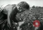Image of cotton picking contest Arkansas United States USA, 1957, second 10 stock footage video 65675028966