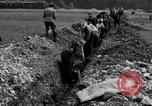 Image of burial pit Arnstadt Germany, 1945, second 12 stock footage video 65675029051