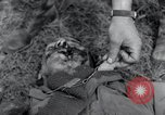 Image of murdered American soldiers Hilden Germany, 1945, second 10 stock footage video 65675029061