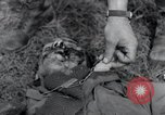 Image of Fallen American soldiers Hilden Germany, 1945, second 11 stock footage video 65675029061