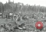 Image of Russian women work removing stumps Archangel Russia, 1918, second 9 stock footage video 65675029280